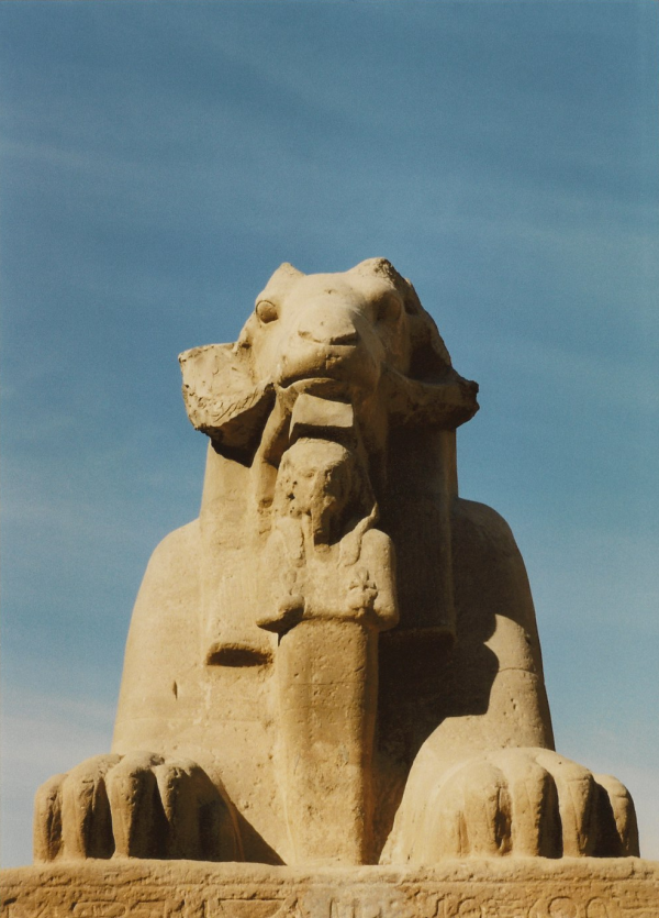 One of Karnak's ram-headed criosphinxes, Ramesses II in Osiris form held protectively between his paws (Photo by Keith Payne)