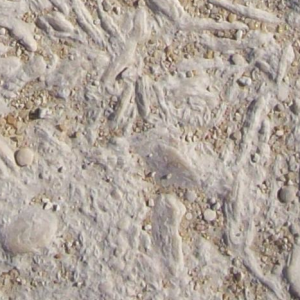 Nummulitic limestone quarried from the Giza Plateau