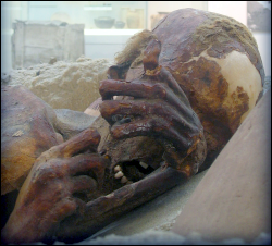 Ginger—one of the more famous examples of a predynastic natural mummy