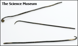 Replicas of the sort of hooks used to remove the brain and clean the cranial cavity (Photo courtesy of The Science Museum (UK) Science and Society Picture Library)