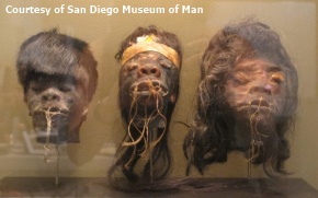 Shrunken heads from the Jivaro Indians of Ecuador--definitely an example of artificial mummification! (Courtesy San Diego Museum of Man)