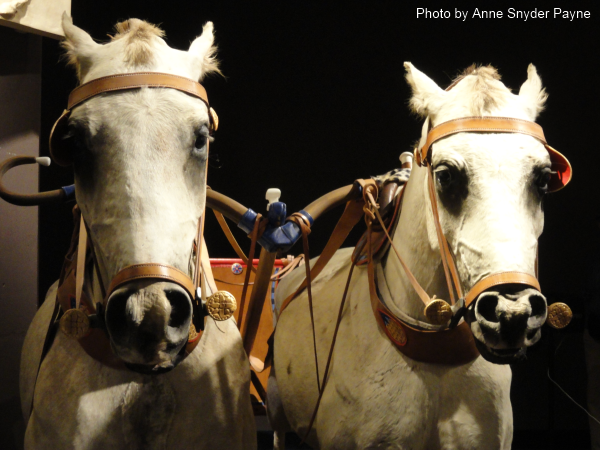 Pairing the right horses for a chariot team could mean the difference between success or failure on the battlefield. (Photo by Anne Snyder Payne)