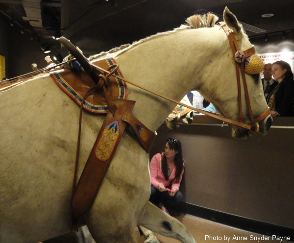 The harness, bridle and blinders, based on the New Kingdom depictions, on the horses drawing the chariot at the International Museum of the Horse (photo by Anne Snyder Payne)
